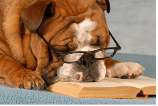 Self-published novels were the bane of the bulldog